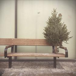 How to kill a Christmas tree